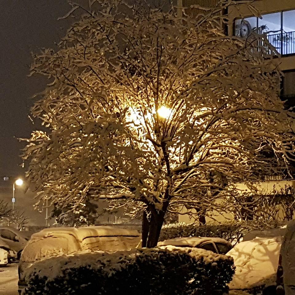 Arbre neige Les Mureaux